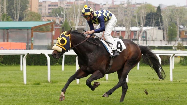 Cavallo Effevi