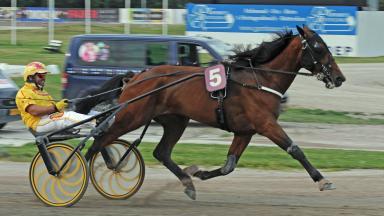 Cavallo Gocciadoro
